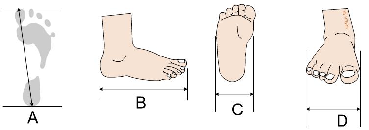 Ergonomics Anthropometrics And Feet